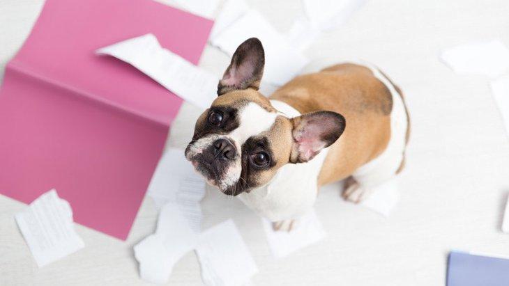 犬がティッシュを食べる理由や対処法、しつけ方まで