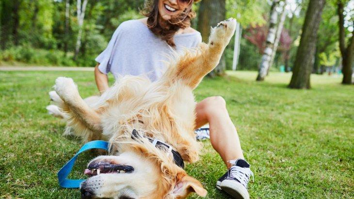 普段の生活で実践できる!犬に喜んでもらえる工夫ポイント5つ