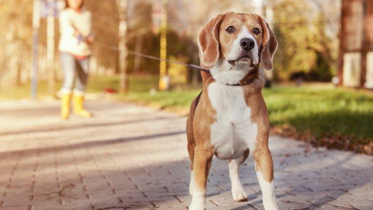 犬がリードを強く引っ張る時の対処法2つ