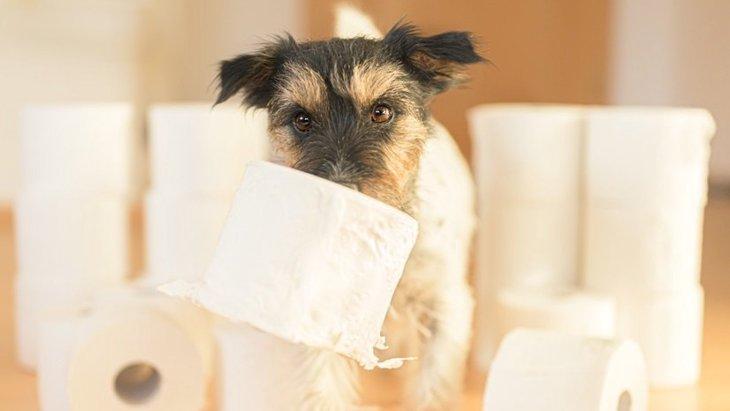 犬がウンチを漏らしてしまう原因5選!適切な対処法とは?