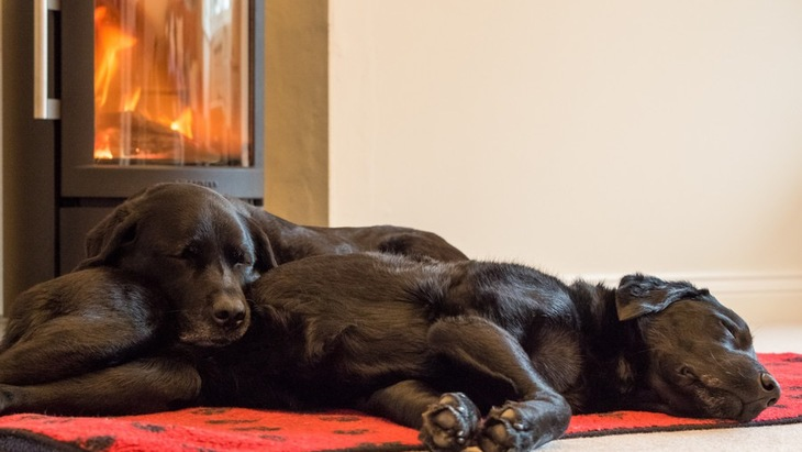 犬がいる家庭でストーブを使う際に気をつけたい4つの事