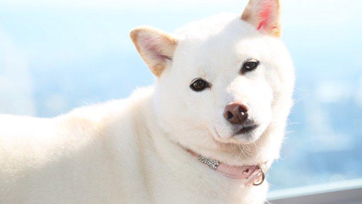 「犬を飼う夢」を見る心理や意味とは