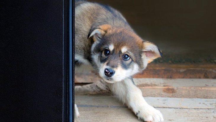 犬が怖がってしまう『見た目』5選!見たら怯えてしまう人にはどんな共通点があるの?