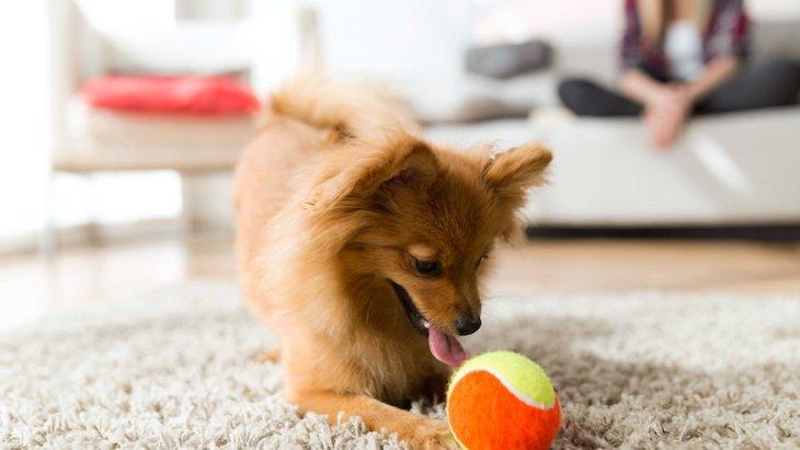 犬と室内でできる『ボール遊び』3選!おすすめな理由や効果について解説