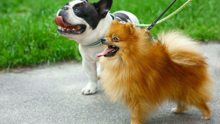 長毛種の犬と短毛種の犬、それぞれの違いと飼う時の注意点