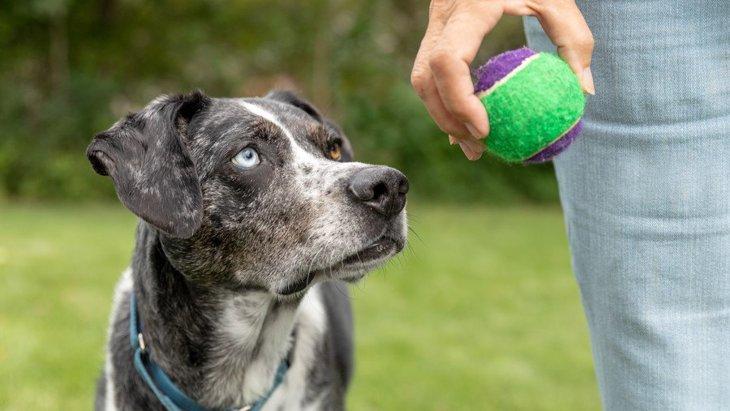 オヤツが落ちたらどこを探す?犬は『重力を理解しているか』という研究結果