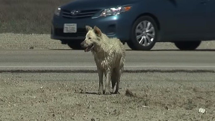 気温40℃…乾燥した平野を数ヵ月さまよった犬を保護