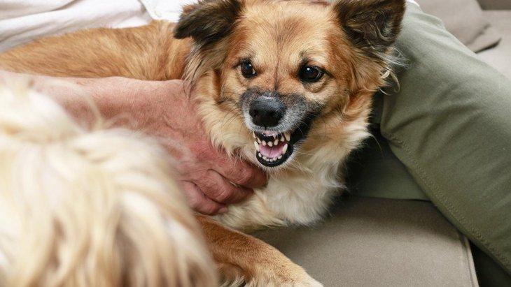 『スキンシップが苦手な犬』がよくする仕草や行動4つ