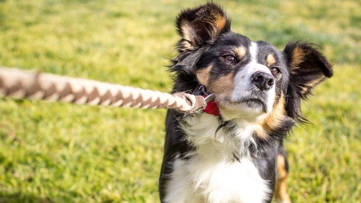 『頑固な犬』がよくしている仕草や行動3選