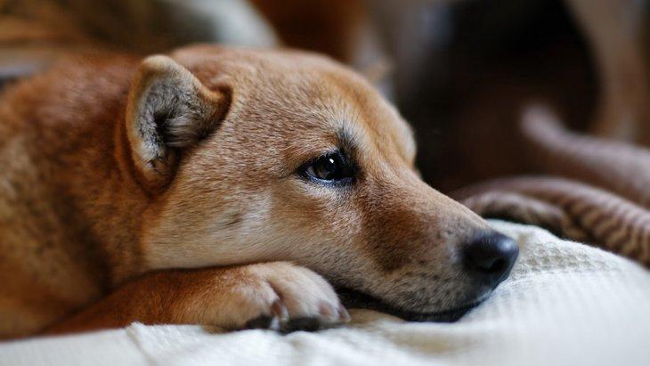 繁殖引退犬の里親になるときの注意点