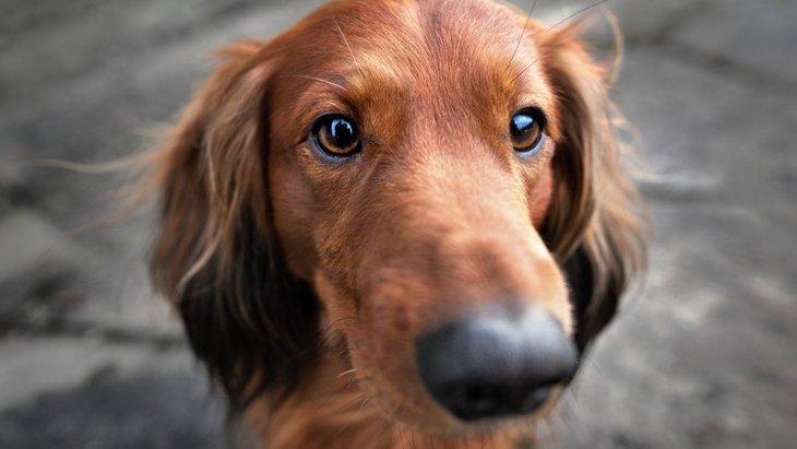 犬が人のおしりを嗅いでくる心理3つ!良い意味?それとも悪い意味?