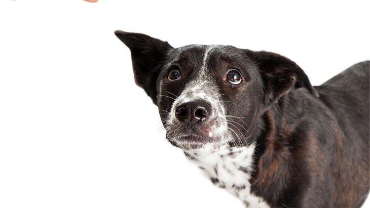 犬の問題行動を悪化させてしまう4つの飼い主の行動