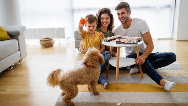 犬の散歩代わりになる『3つのこと』 外に行けない時に室内でもできる遊びとは