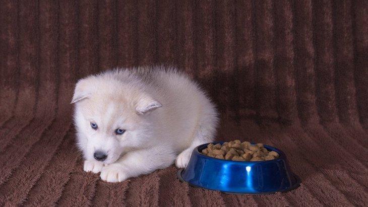愛犬がドッグフードを食べない理由とは?考えられる病気と食べさせる工夫や対処法
