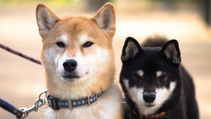 ネガティブなイメージを持たれている犬種4選