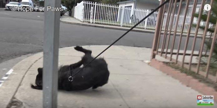 【動画必見】走る犬を一発捕獲も油断禁物!保護活動は犬も人も真剣勝負
