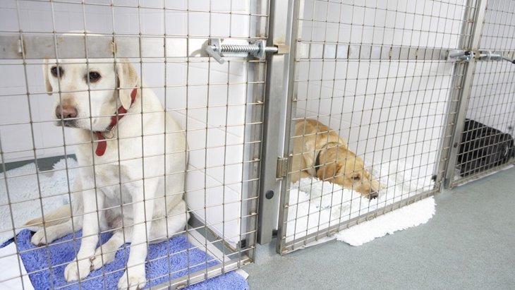 保護施設の犬たちはどこから来るの?