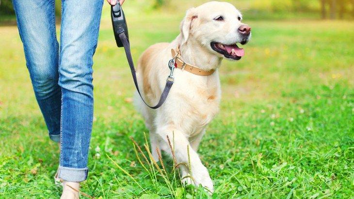 犬の散歩をしてはいけない『危険な場所』4選!こんな場所を通ってる人は要注意