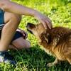 犬のストレスサイン、見逃さないで!カーミングシグナルを知ろう