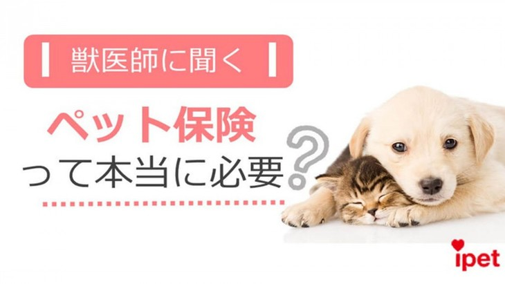 【獣医師に聞く】ペット保険って本当に必要?(前編)