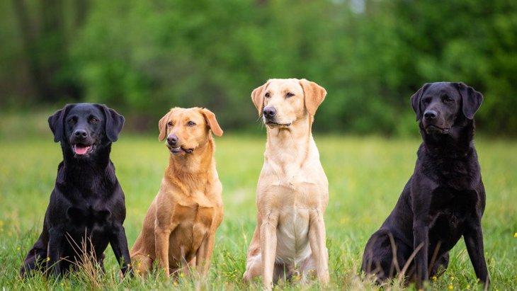人気の大型犬ランキングTOP5!日本と海外では人気の大型犬も異なる?