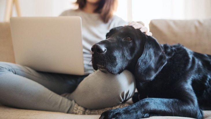 犬が『飼い主に寄ってくる』時に考えている7つのこと