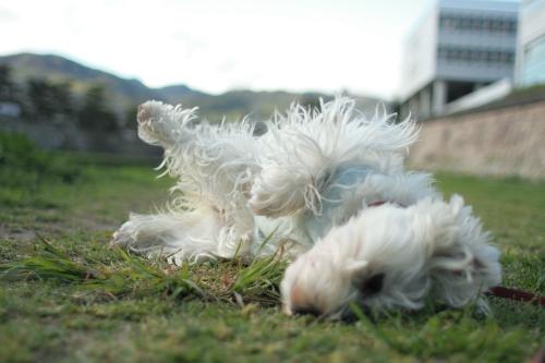 犬の服のおすすめブランド★使い心地と評価口コミ