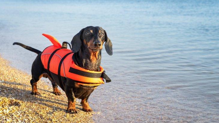 夏を前にして繰り返される警告「犬を緑の水に近づけないで」
