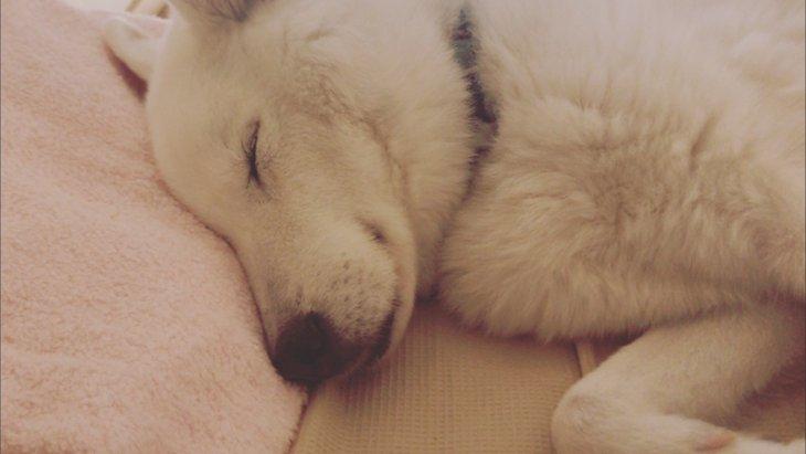 保護犬との出逢い 家族になっていく中で感じた嬉しいことや大変なこと