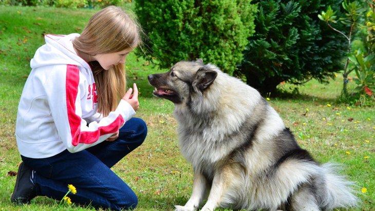 愛犬とアイコンタクトをとる重要性と身につける方法