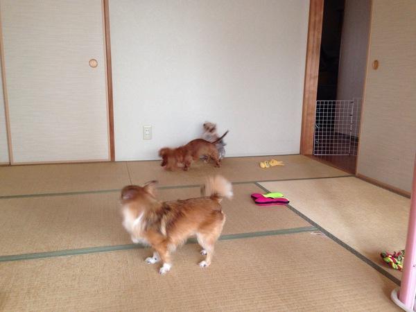 梅雨時期の犬のストレス発散方法!