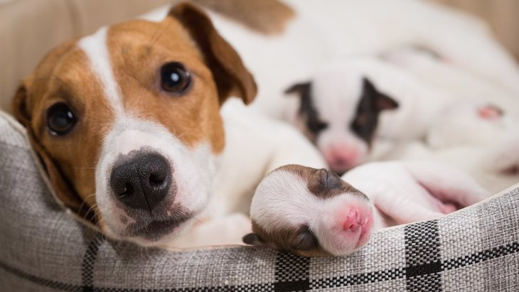 愛犬が妊娠した!産箱は必要?目的と作り方