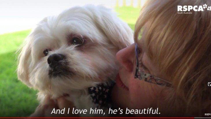 酷暑の中で心を閉ざした小型犬をレスキュー、見違えるほど元気に!