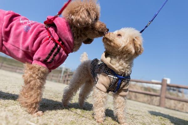 犬の性格 ~わんちゃんのサイズによる違い~