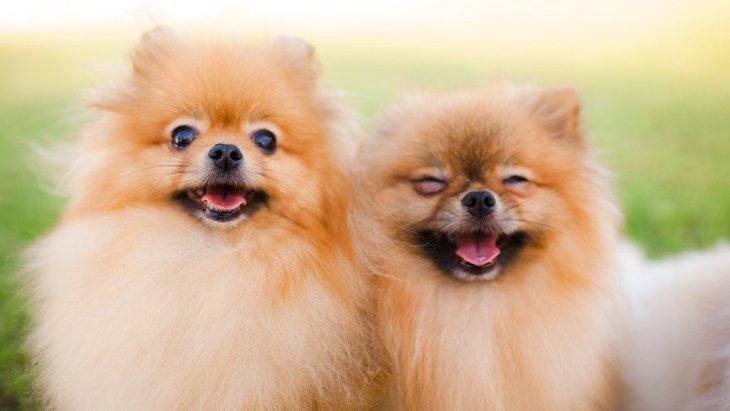 多頭飼いの犬にとって同居犬はどんな存在なの?