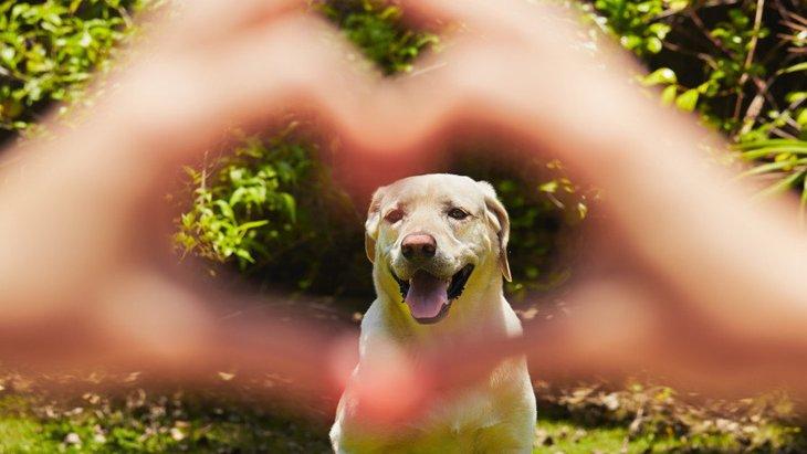 犬は人間を見る時に顔よりも『手と腕』に注目する傾向があるという研究結果