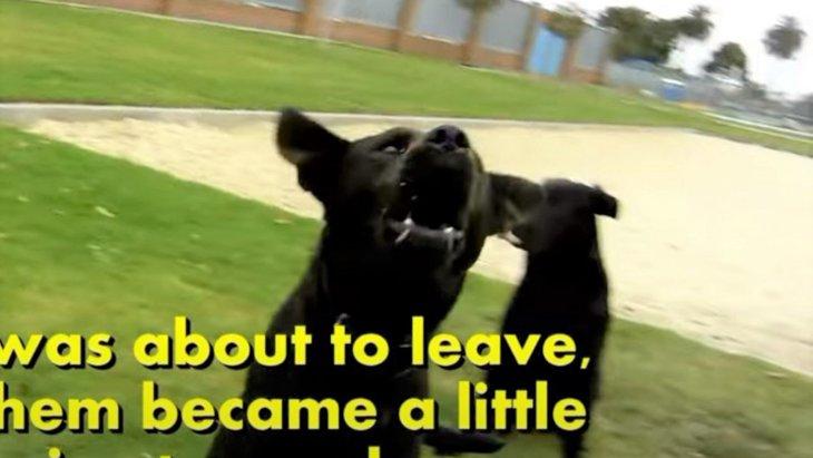 数えきれないほどの野良犬がうろつく街…ロサンゼルスの悲しい現状