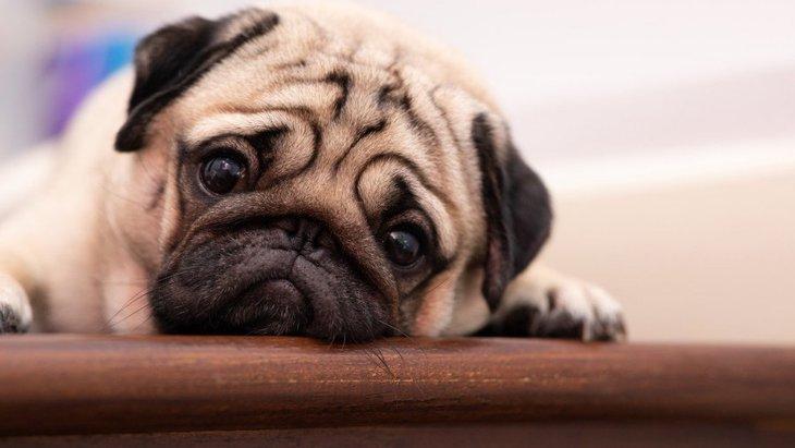 外出自粛で散歩したくないけど…愛犬に起こるかもしれない危険なリスク3つ