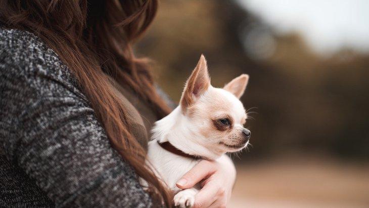 犬がよくする「ツンデレサイン」4選