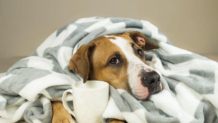 犬に烏龍茶を飲ませても大丈夫?