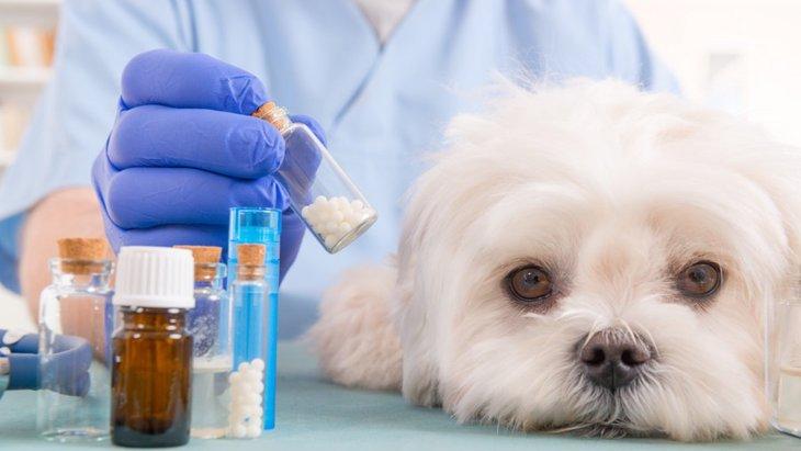 犬の肝性脳症の原因と症状、治療法から予防法まで