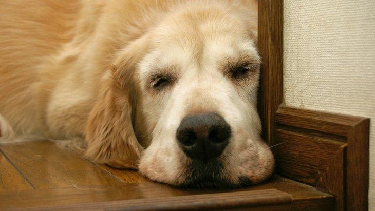 ボケてきた犬が見せる5つの行動やしぐさ
