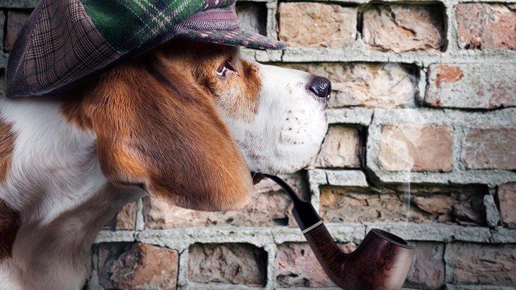 ペット探偵ってどんなことをしてくれるの?