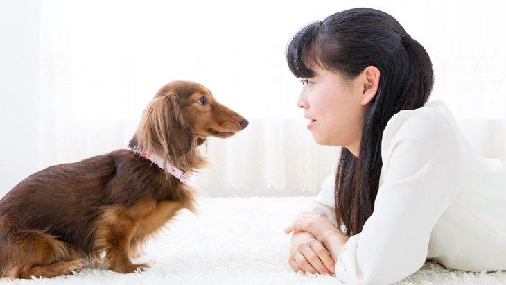 犬と心が通じてる飼い主と、心が通じてない飼い主の違い