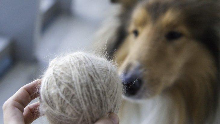 犬の抜け毛を無駄にしない5つの活用法