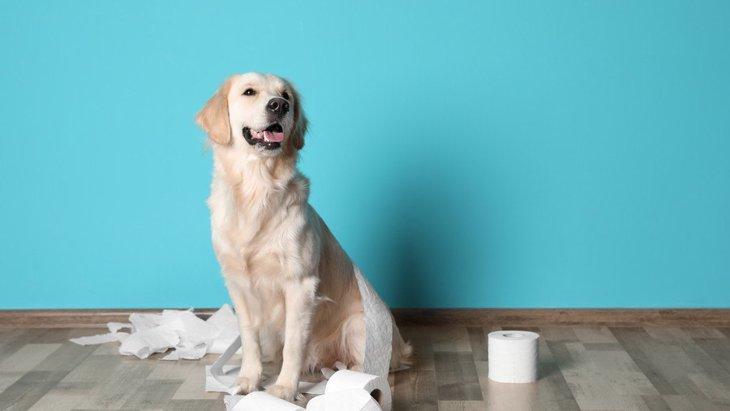 ご褒美が欲しいから?犬が『トイレをしたふりする』理由3選