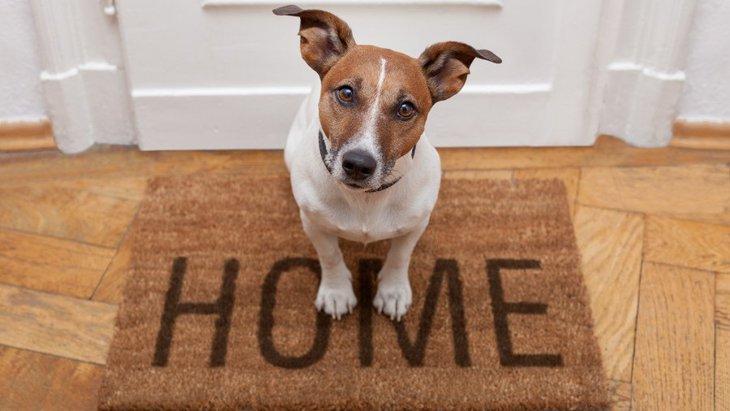 疲れも吹き飛ぶ!犬が飼い主の帰宅を大喜びで迎えてくれる心理5つ