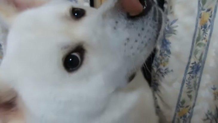 誰もいないはずなのに…?スピリチュアルなことを信じたくなる秋田犬の動画