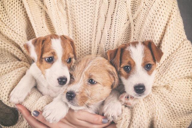 犬好きが経験しがちな『7つのあるある』