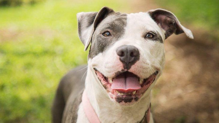 犬の攻撃的な行動と腸内環境に相関関係が発見された!【研究結果】